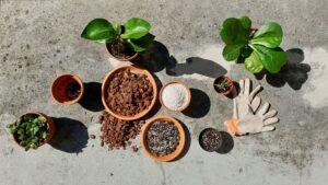 Zakaj in kako mešamo zemljo za rastline?